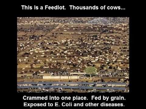 100% Organic Grass Fed Beef California - www.jcjranch.com