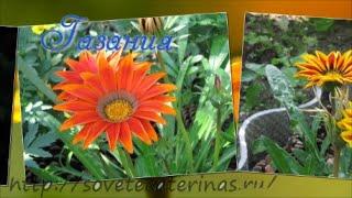 Цветы в саду с весны до осени(Цветы украшают сад, цветник. А чтобы цветение было с весны до осени необходимо сделать правильную подборку..., 2015-08-30T12:28:51.000Z)