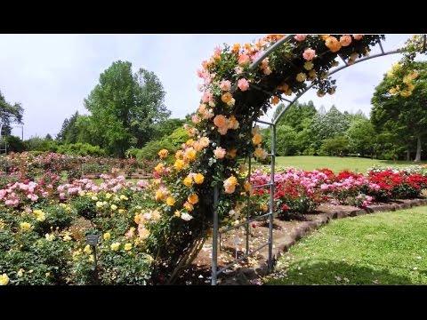 最高! バラの花園  【茨城県植物園 Ibaraki Prefecture Botanical Garden】