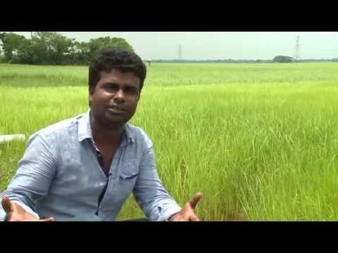 Organic Farming (অর্গানিক চাষাবাদ)_HD Media Production