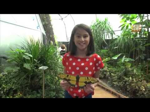 okto goes to Butterflies Up-Close at Science Centre Singapore!