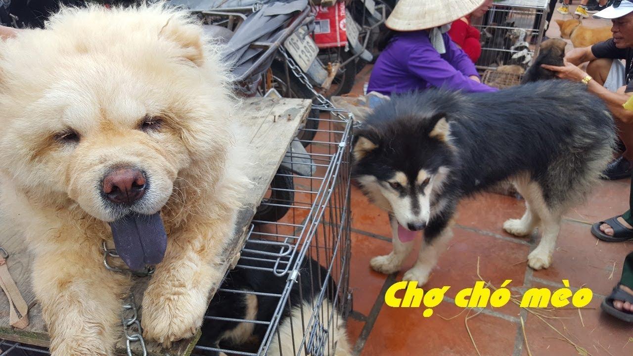 Sự thật về chợ bán các loài chó mèo cảnh rẻ đẹp