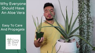 How To Care and Propagate Your Aloe Vera | Houseplant Care Guide