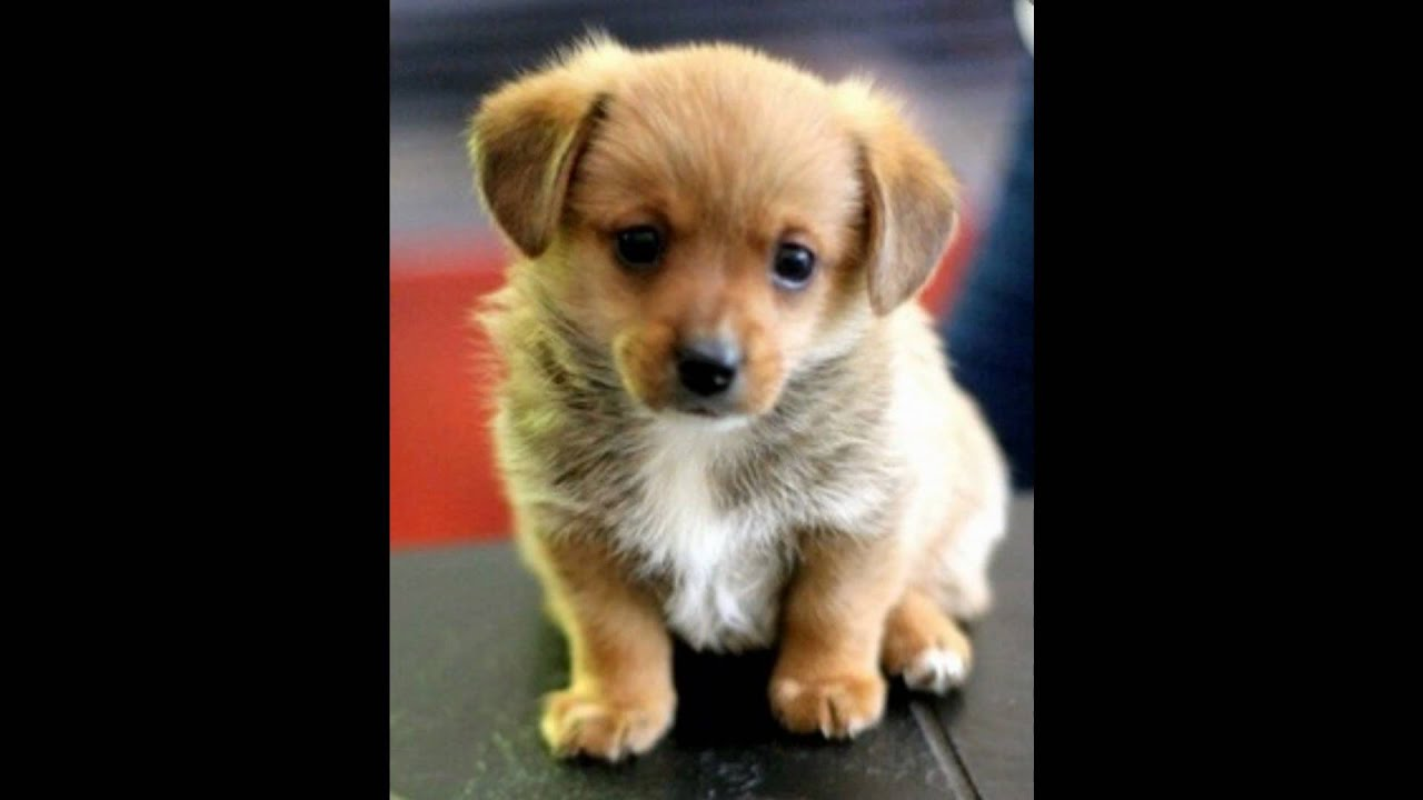 Berühmt Süße Hund Malvorlagen Zum Ausdrucken Fotos - Druckbare ...