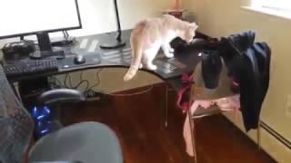 Как отучить кота лезть на стол