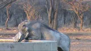 Bowhunting Africa - Ozondjahe Safaris - Plains game bow hunt Sept 2013.