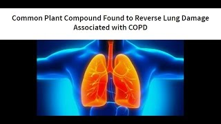 Common Plant Compound Found to Reverse Lung Damage Associated with COPD