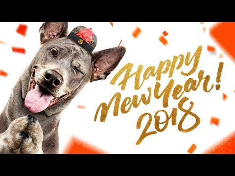 Happy DOG Year 2018 ! 新年快乐
