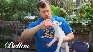 Bryan besucht mit Nikki eine Ziegen-Farm: Total Bellas Bonus Clip, 19. Oktober 2016