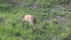 Florida Archery Season 2018