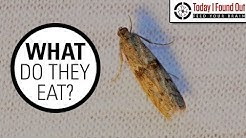 The Truth About Clothes Moths