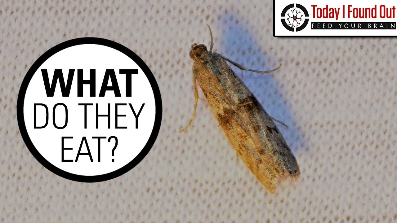 How To Get Rid Of Clothes Moths Uk