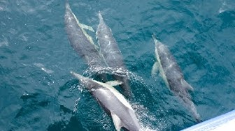 Delfiinejä bongaamassa Sydneyssä by Matkakuume.net   ParisRio Travel Channel