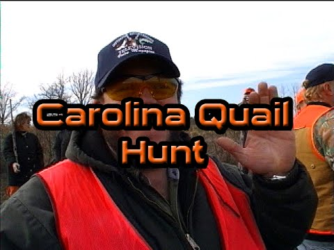 North Carolina Fall Quail Hunt ( Eposode 322 )