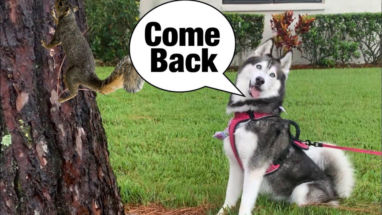 Meeka Talks Back To A Squirrel! (SPEAKS PERFECTLY!)