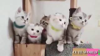 🔴 Funny and Cute Baby Cat Videos Compilation (2018)  🔴 Baby Cats