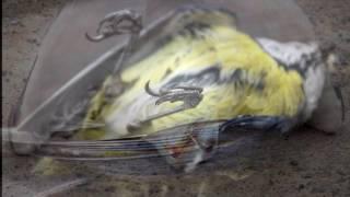 TV ad dead bird