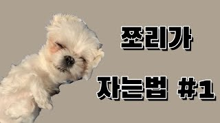 쪼리가 자는법#1 // 아침에 쪼리의 모습♡