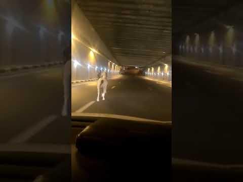 צפו: באמצע הלילה - סוסים דוהרים בכביש בגין בירושלים