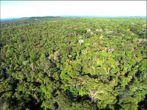 The Cristalino Jungle Lodge - An Amazon Sanctuary