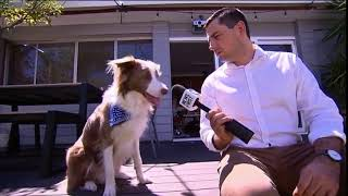 Dog steals Microphone Foam during Interview