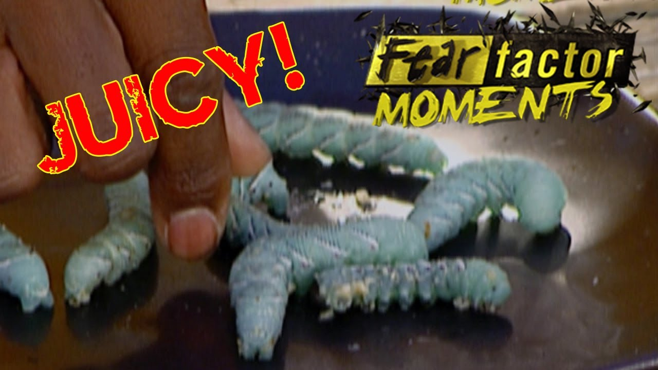 115 best images about fear factor party on Pinterest ...  Fear Factor Worms