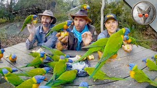 Parrots Crash our Picnic! - in VR180!