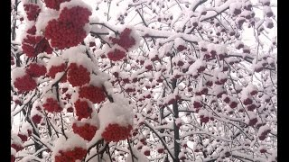 Страшное видео) Как правильно ездить на работу? - Вот так)(Утро, снег, дорога) Страшное видео), 2015-11-29T06:13:18.000Z)