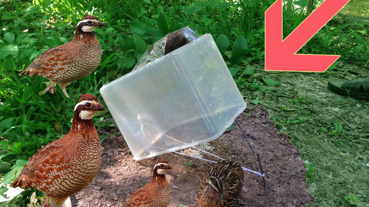 Awesome Quick Bird Trap Using Plastic Box - The Best Bird Trap ...