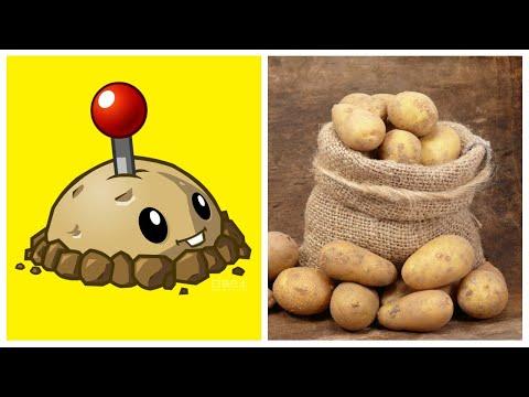 РАСТЕНИЯ В РЕАЛЬНОЙ ЖИЗНИ | ПЕРСОНАЖИ ИЗ ИГРЫ РАСТЕНИЯ ПРОТИВ ЗОМБИ