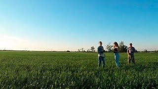 Обзор зерновых и подсолнечника. Засуха!