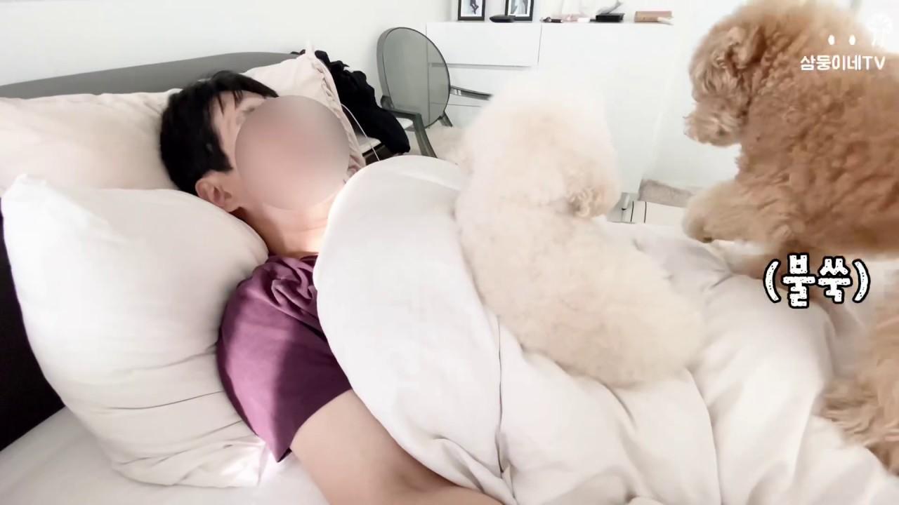강아지가 주인을 깨우는 방법(시간도 칼같음ㅋㅋㅋ)
