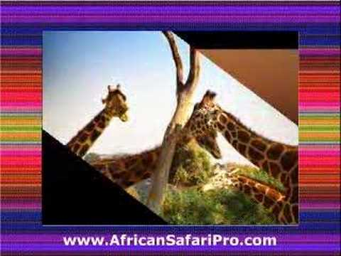 African Safari Pro