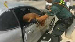 Guardia Civil pelasti koiran kuumasta autosta