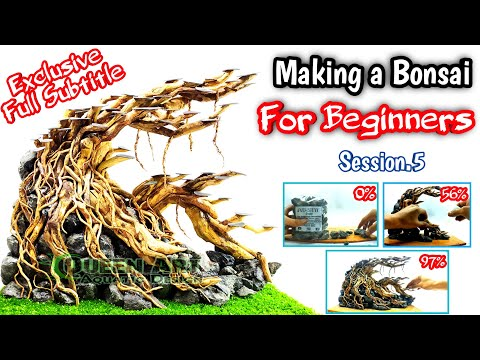 sesi.5---membuat-bonsai-aquascape-akar-senggani-untuk-pemula
