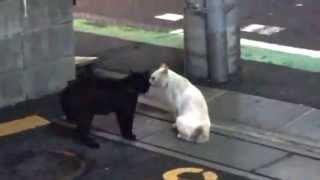 自宅の近くの駐車場で黒ネコと白ネコがケンカしてました。