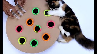 Whack A Mole Game   DIY Cat Toy From Cardboard