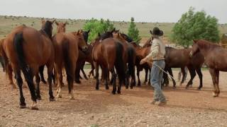 From Coward to Cowboy - Life of a Cowboy Video