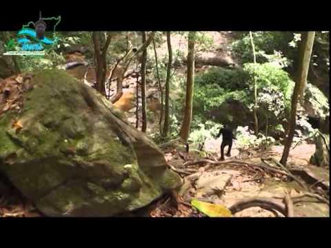 Historical Olumirin Waterfall, Osun State