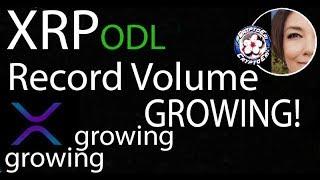 XRP Record Volume ODL, Ripple Q3 Report, FUD in Crypto, Bitrue AMA Recap