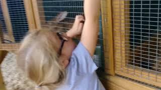 Petting zoo..casola farms