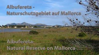 Mallorca: Albufereta Naturschutzgebiet / Majorca: Albufereta Nature Reserve