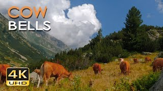 4K Mountain Cows - Cowbell Sounds - Relaxing Animals & Nature Video - Ultra HD - 2160p