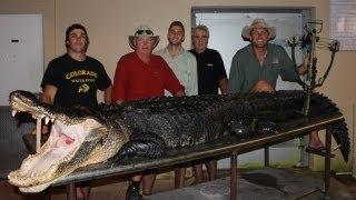 Alligator Hunting: