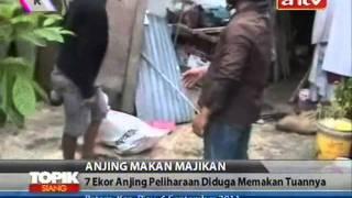 Download Video TOPIK ANTV Kelaparan, 7 Ekor Anjing Memangsa Majikannya MP3 3GP MP4