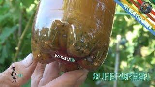 Mosca della frutta e mosca dell'olivo: rimedio naturale economico fatto in casa (lotta biologica) 4k