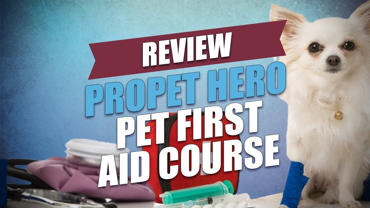 Propet hero pet first aid course review youtube propet hero pet first aid course review 1betcityfo Choice Image