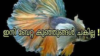 How to save baby betta fry malayalam #fish care tips