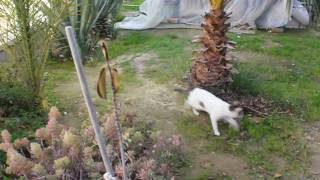 Спасти кота Барсика Израиль 2017