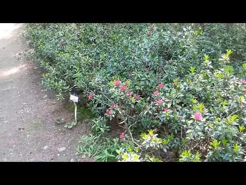 Giardino Pietra Corva : Giardino alpino di pietra corva ricarolricecitocororo